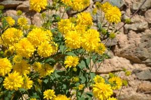 1412944_yellow_flowers
