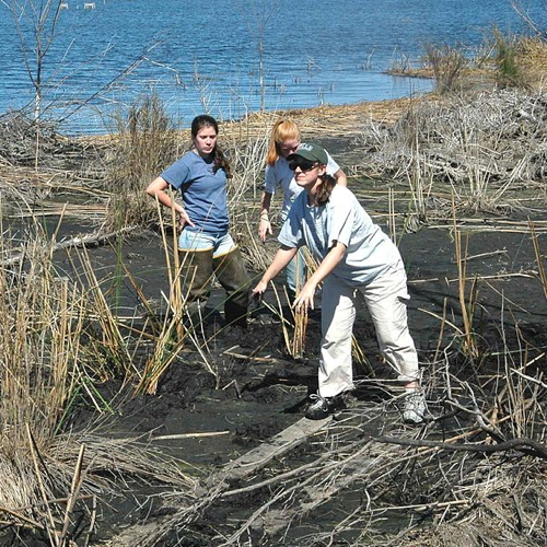 1024px-A_group_of_women_volunteers_helping_to_replant_marsh_grass_on_the_refuge