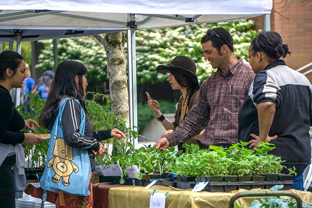 Farmers' market - Plant sales - cropped