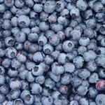 Have fun at the blueberry farm