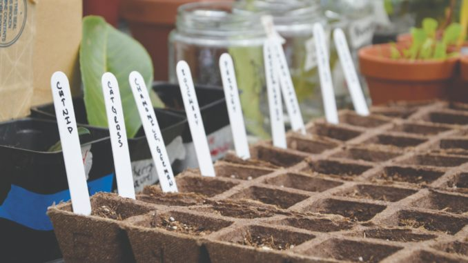 Sowing seeds in the BC greenhouse.